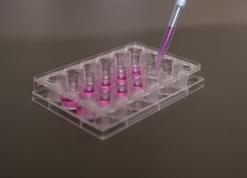 特定細胞加工物製造